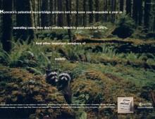 Kyocera – racoons